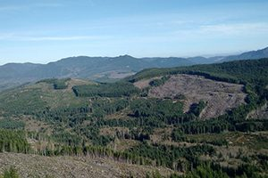 View of Ozette - Timberland Management